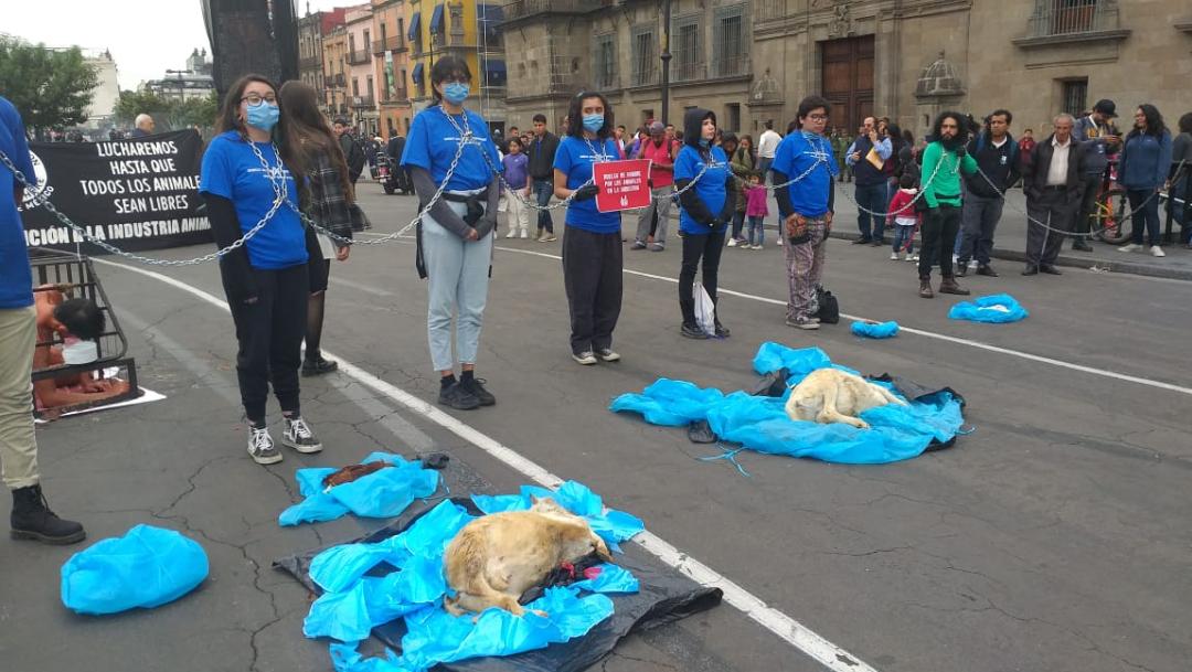 Activistas pro-animales se encadenan afuera de Palacio Nacional, 4 octubre 2019