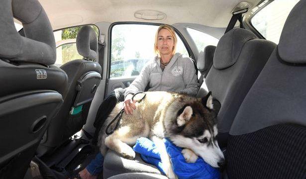 Foto:Mujer pierde Hogar y vive en Auto con su Perrita. 6 Octubre 2019