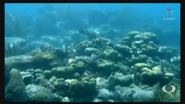Foto: Zona Arrecifes Cozumel Cerrada Temporalmente 7 Octubre 2019