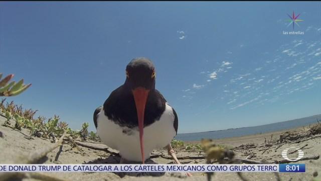 'Aves playeras' busca difundirlos valores de la naturaleza