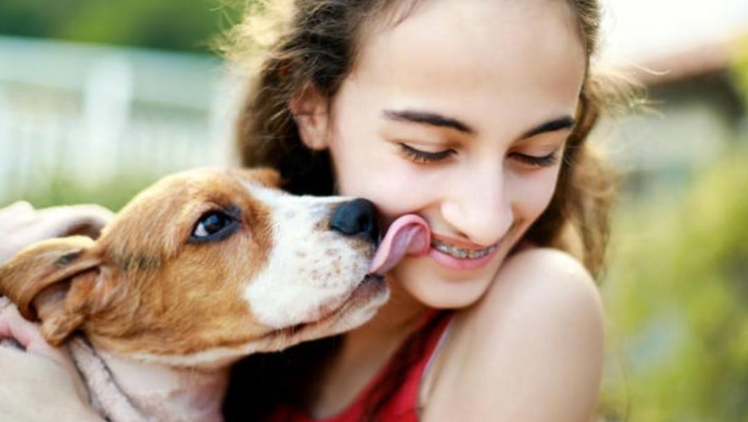 FOTO Besar a mascotas podría afectar hígado y pulmones