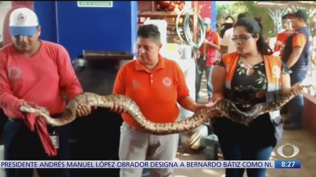 Capturan serpiente y cocodrilo en Coatzacoalcos, Veracruz