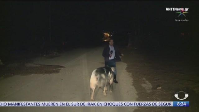 Cerdo persigue a periodista durante transmisión en vivo