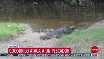 FOTO: Cocodrilo ataca a pescador en Oaxaca, 10 noviembre 2019