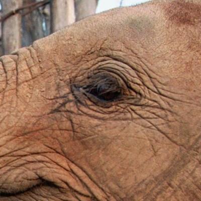 Al menos 200 elefantes mueren de hambre en Zimbabue