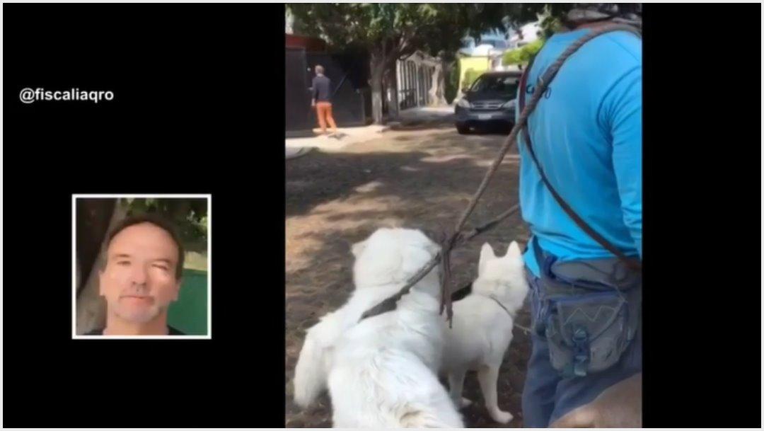Foto: Captan a extranjero intentando atropellar a perros, 3 de noviembre de 2019 (Redes sociales)