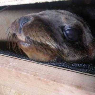 Fotos y video: Detienen a dos hombres que trasladaban lobos marinos en CDMX