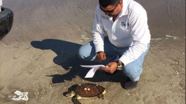 Especialistas analizaron las tortugas muertas en Solo La Marina, Tamaulipas