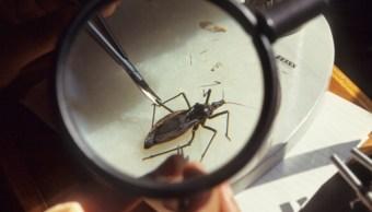 Foto: Medicamento para Alzheimer podría curar la enfermedad de Chagas, 15 de noviembre de 2019 (Getty images)