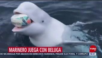 FOTO: Video Marinero Jugando Con Una Beluga