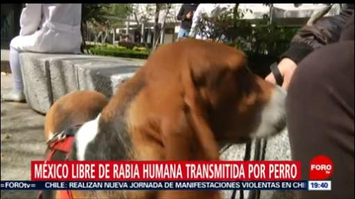 FOTO:México, libre de rabia transmitida por perro, 12 noviembre 2019