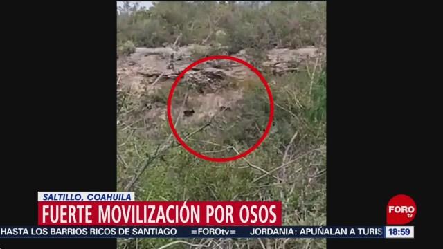 FOTO: Movilización por presencia osos Saltillo,