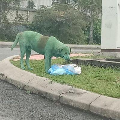 Joven encuentra a perro pintado de verde y buscando comida