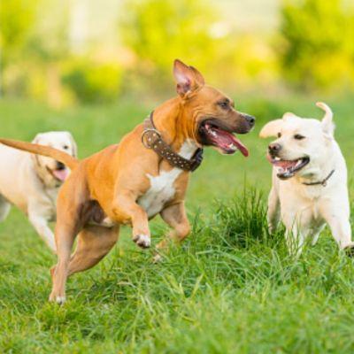 Perros ayudan a la conservación de especies en peligro de extinción