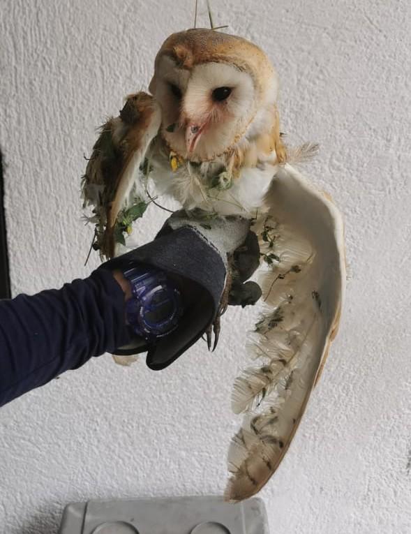 Profepa rescata y libera a 10 ejemplares de vida silvestre