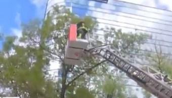 Los bomberos cerraron la avenida y con una escalera telescópica subieron hasta donde estaba el gato, 13 de noviembre de 2019 (FOROtv)