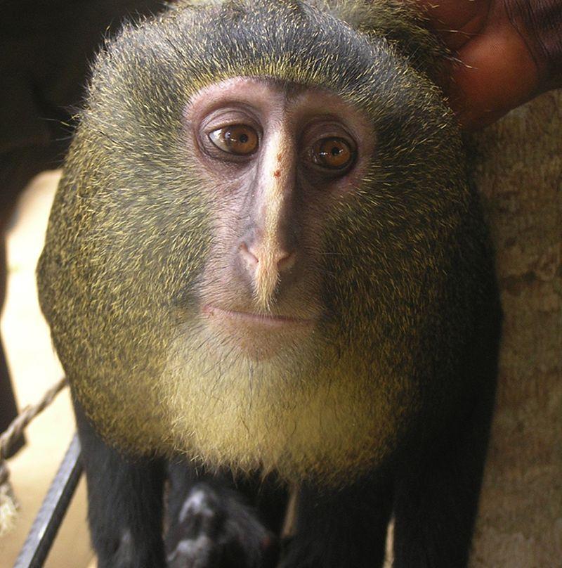 Animales que parecen humanos: los casos más interesantes