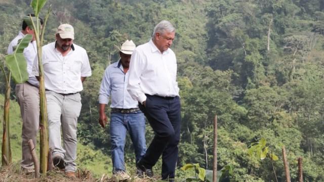 AMLO pide a beneficiarios Sembrando Vida trabajar la tierra