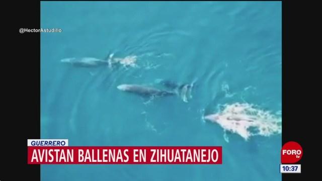 Foto: avistan ballenas en zihuatanejo guerrero