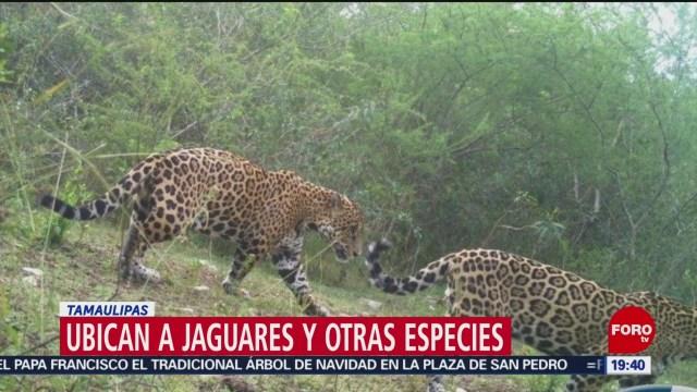 Foto: Cañón Diablo Monitoreo Preservar Felinos 5 Diciembre 2019