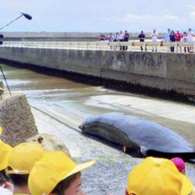 Japón aprueba controvertida ley para caza comercial de ballenas