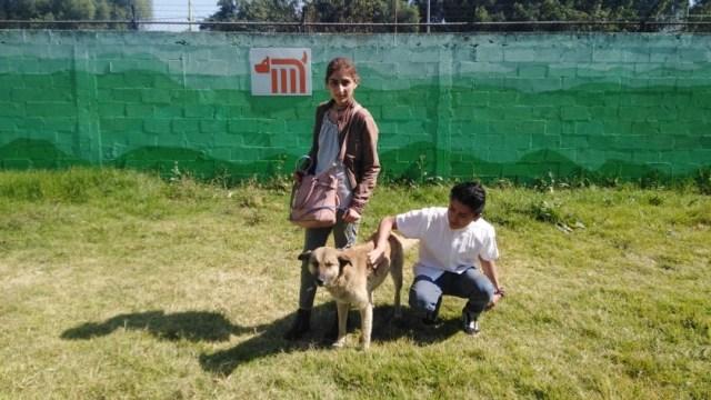 Foto: Los interesados pueden consultar la página https://www.metro.cdmx.gob.mx/adoptame#2, donde además de conocer los requisitos de adopción, podrán también ver las fotografías de estas mascotas