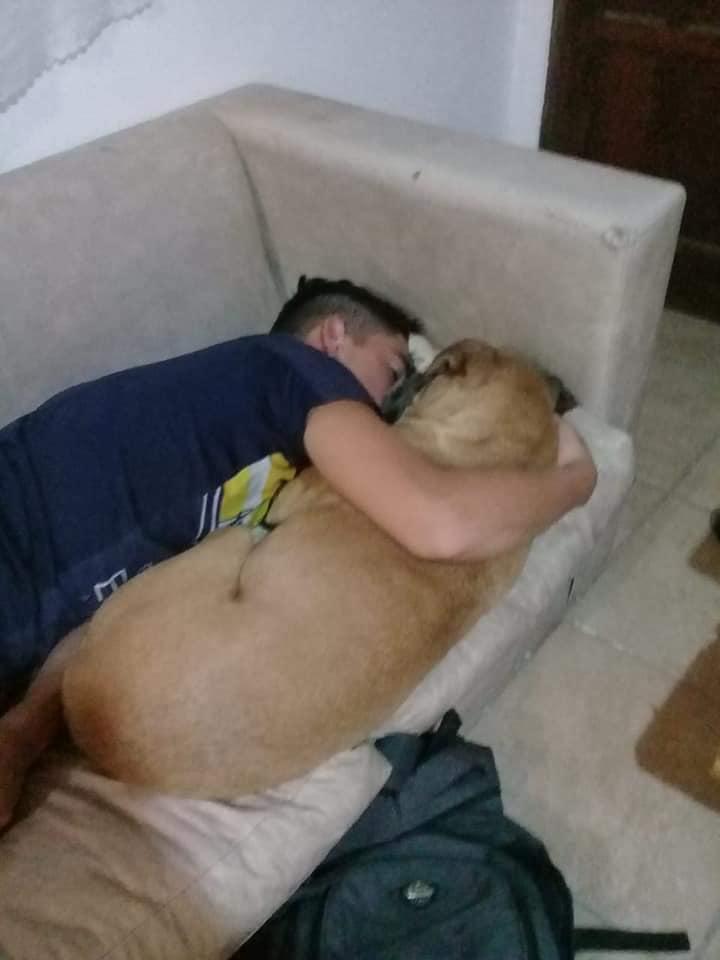 Pirotecnia-Fuegos-artificiales-muere-perro-paro-cardiaco