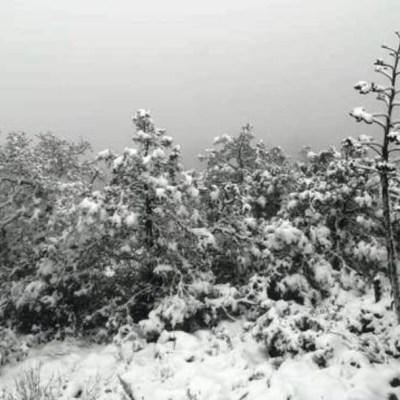 Fotos: Primeras nevadas de la temporada en Zacatecas