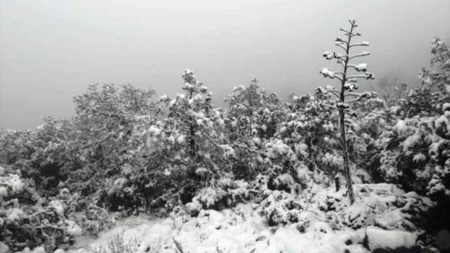 FOTO:Las primeras nevadas de la temporada en Zacatecas