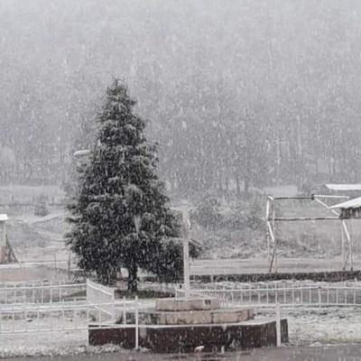 Se registra caída de nieve en el municipio de Madera, Chihuahua