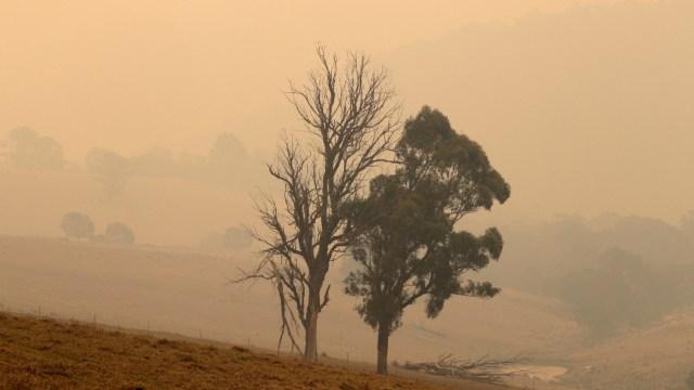 Foto: Restauración en Australia llevará décadas, 11 de enero 2020, (AP)