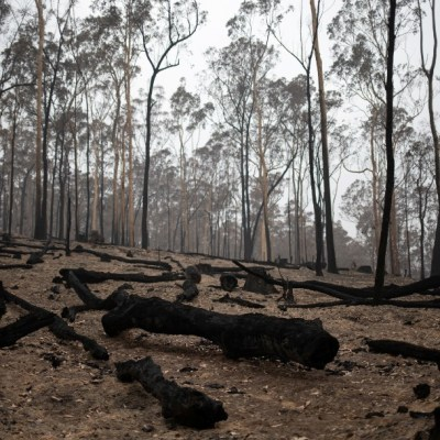Primer ministro australiano admite errores al afrontar incendios
