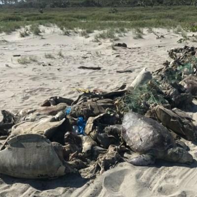 Marea roja en Oaxaca continúa matando tortugas