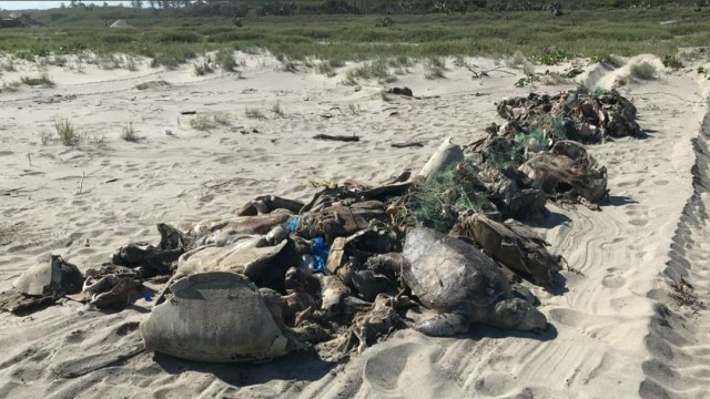 Foto: Suman más de 300 tortugas muertas por marea roja en Oaxaca, 12 de enero de 2020 (Cuartoscuro, archivo)