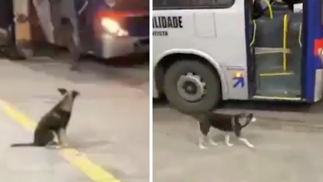 Perro espera todos los días al conductor que le da comida