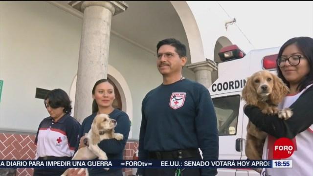 FOTO: cruz roja realiza cursos de entrenamiento para perros rescatistas voluntarios