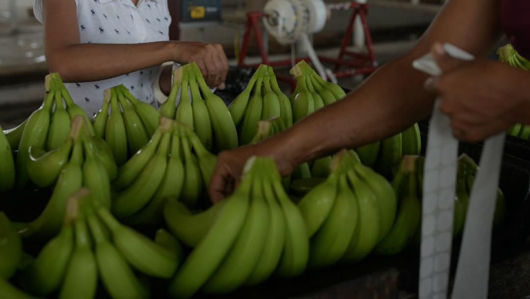 plátanos guateques y diabetes