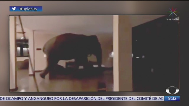 elefante se mete a hotel en sri lanka