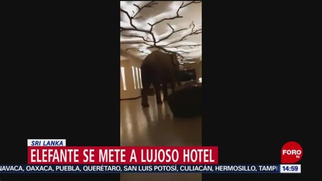 FOTO: elefante se mete a lujoso hotel