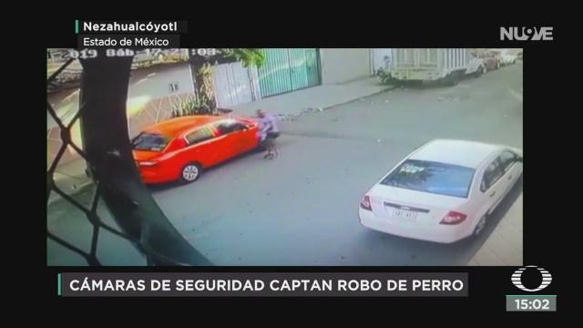 FOTO: familia roba a un perrito pug en nezahualcoyotl