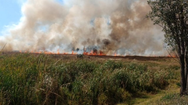 Foto: Incendio en la Ciénega Grande, en Cuemanco, alcaldía Xochimilco, CDMX.