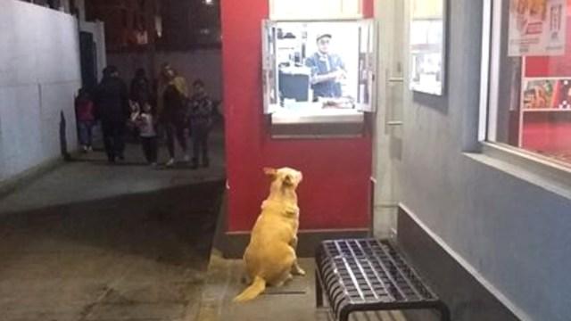 Muere dueño de perrito y empleados lo alimentan diariamente