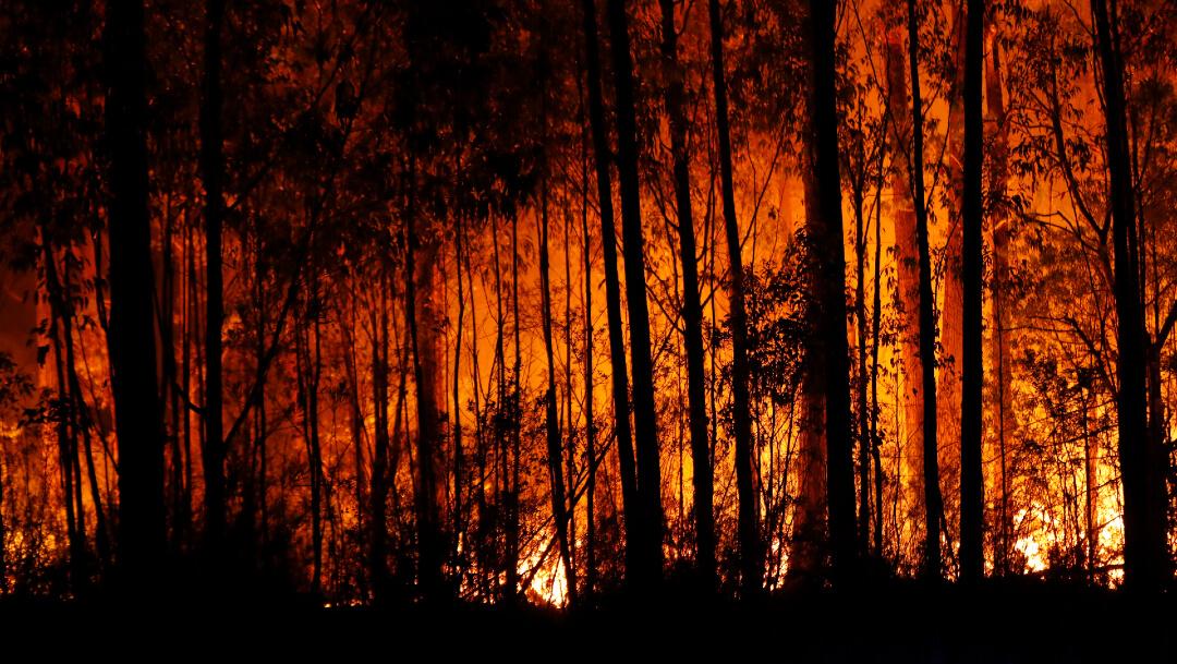 FOTO Ordenan desalojo masivo en Australia por amenaza de incendios (Getty Images)