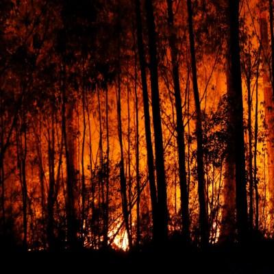 Más de 480 millones de animales muertos por incendios en Australia
