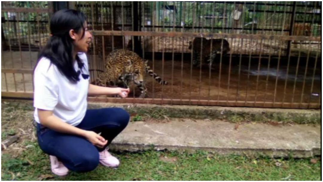 Foto: Mujer puso en riesgo su vida tras intentar retratarse con jaguar, 5 de enero de 2020 (Twitter)