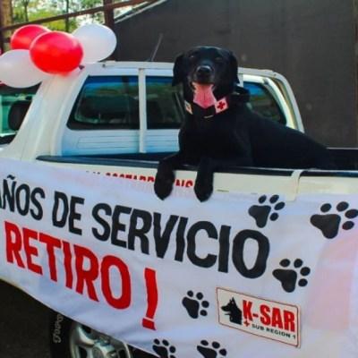Perrito se jubila de la Cruz Roja tras nueve años de servicio