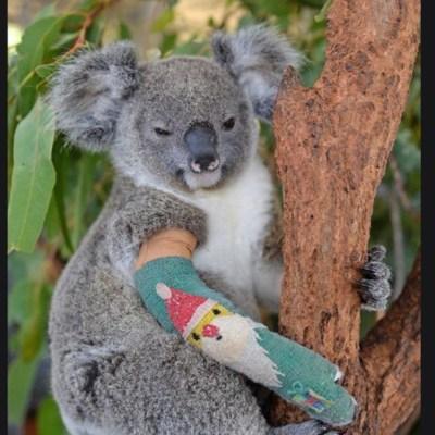 Familia de Steve Irwin salva a miles de animales por incendios en Australia