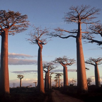 Deforestación y cambio climático condenan a miles de especies de Madagascar a la extinción