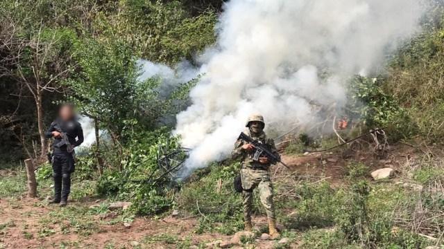 Foto: La Secretaría de Marina, en coordinación con la SSP de Sinaloa y la Policía Estatal Preventiva, calcinaron aproximadamente 800 metros cuadrados de hierba; no hubo detenidos