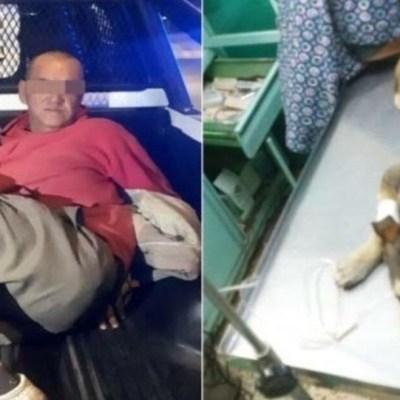 Muere Mati, la perrita que fue violada por un hombre en Nezahualcóyotl